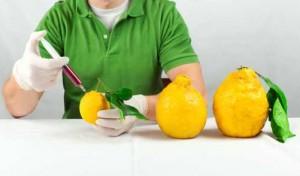 R-147311961-ogm-limone