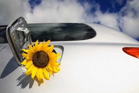Sunflower in a gas tank
