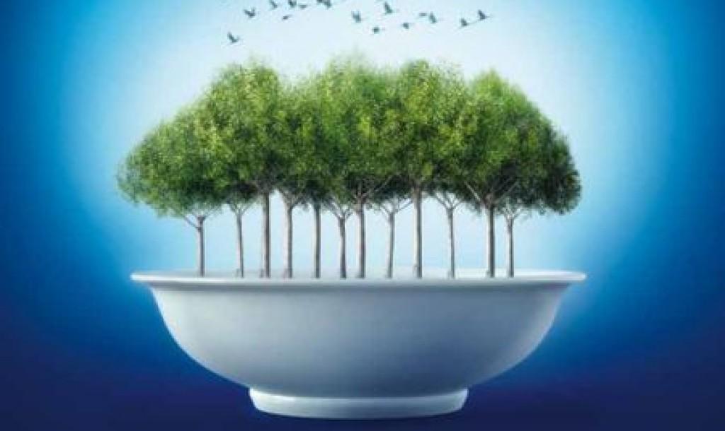 piante-nel-piatto