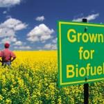 Biocarburanti di scarti animali riducono drasticamente le emissioni gas serra