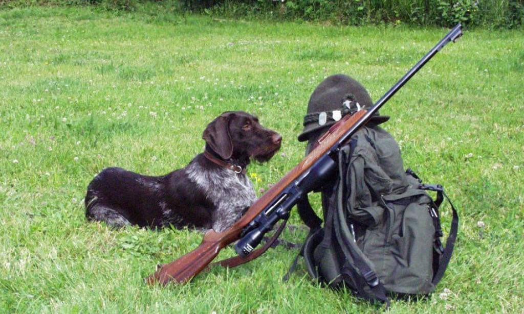 caccia cane