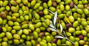 Olio d'oliva, Tunisia, export, Maurizio Martina
