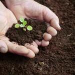 Protezione e uso sostenibile del suolo, Parlamento europeo vota per introdurre un quadro giuridico comune