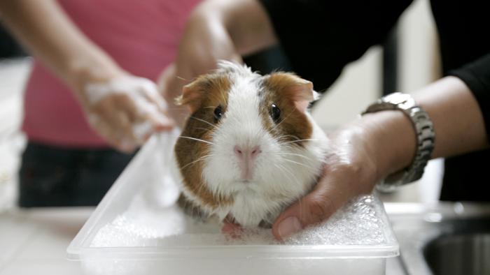 Cosmetica, Corte Ue: no a prodotti testati su animali