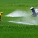 Pesticidi, vendite in calo nell'UE nel 2019. In Danimarca e Italia la flessione maggiore rispetto al 2011