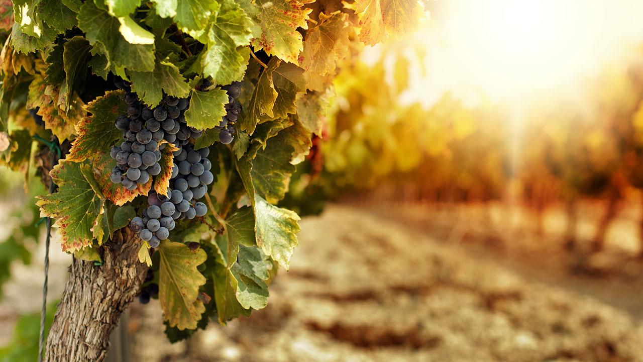 Sono più di 3 milioni gli ettari dedicati a vigneti in Europa: l'80% è per  vini di qualità - Eunews