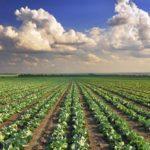 La Fao: basta con l'agricoltura intensiva, ha raggiunto livelli limite