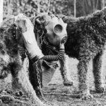 I cani dimenticati eroi delle guerre. E le tragiche paure dei britannici nel 1939