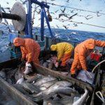 Pesca, accordo tra i ministri UE per estendere fino a luglio le quote 2021 condivise con Londra