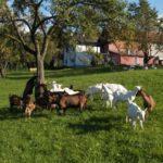"""La filiera zootecnica europea denuncia: """"Sulla Farm to Fork ancora nessuna valutazione di impatto"""""""