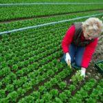 Agricoltura, Italia prima in UE per numero di occupati e valore della produzione connessa