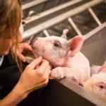 Corte dei Conti Ue 'alleata' di Michela Brambilla: controlli sul benessere degli animali