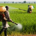 Pesticidi, un rapporto dell'ONG PAN Europe mette in dubbio l'indipendenza dell'EFSA nella valutazione