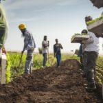 'The Harvest', in Parlamento Ue la denuncia del lato insostenibile del made in Italy