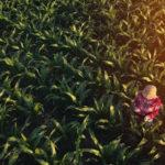 Brexit, Copa e Cogeca: Senza accordo ci rimettono gli agricoltori