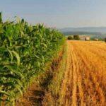 Dalla cattura di carbonio all'agricoltura bio: le pratiche che l'UE vuole finanziare attraverso la PAC