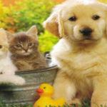 Dal Parlamento europeo le nuove misure contro il traffico illegale di cani e gatti