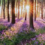 Green Deal, gli eurodeputati chiedono una legge UE per la biodiversità al 2050