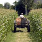 Pochi giovani ai vertici delle aziende agricole.
