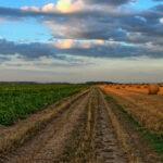 Sostegno a piccole aziende e giovani agricoltori, come la PAC può ridurre l'abbandono dei terreni