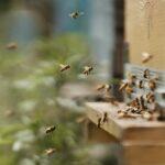 Fattori da stress sulle api da miele, l'EFSA estende al 4 marzo la consultazione pubblica