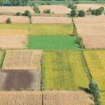 Agricoltura, in UE calano indice dei redditi e valore totale della produzione nel 2020