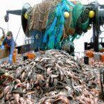Pesca, accordo tra i ministri UE sui limiti di cattura nel Baltico per il 2022
