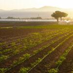 Agricoltura del carbonio, entro fine anno il piano d'azione per un nuovo modello di business 'verde'