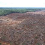 Dalla soia all'olio di palma, l'UE è il secondo importatore al mondo di materie prime da deforestazione tropicale