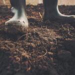 Green Deal e protezione del suolo, il Parlamento UE si batte per un quadro giuridico comune