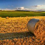PAC e cambiamenti climatici, la Politica agricola comune