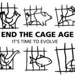 'End the Cage Age', il 30 giugno la risposta della Commissione all'iniziativa dei cittadini per rimuovere le gabbie dagli allevamenti