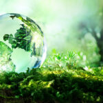 Green Deal, l'Eurocamera chiede una legge europea a tutela della biodiversità