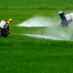 Glifosato: per Francia, Ungheria, Paesi Bassi e Svezia l'erbicida non è cancerogeno
