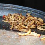 Tarme della farina, in Gazzetta il regolamento che autorizza al commercio il primo insetto come nuovo alimento