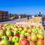 Procedura di infrazione UE contro l'Italia e altri 11 che non hanno recepito le norme contro le pratiche commerciali sleali nell'agroalimentare