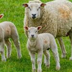Benessere animale, Bruxelles avvia l'iter per modificare la normativa europea