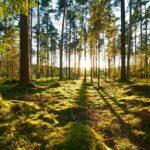 Pozzi di carbonio e taglio emissioni, le sfide dell'agricoltura nel pacchetto clima 'Fit for 55'