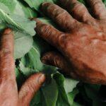 La pandemia ha aggravato la fame: 800 milioni le persone che soffrono di malnutrizione