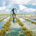 Per il cibo del futuro serve una grande alleanza. Alla FAO il confronto tra governi, produttori e contadini