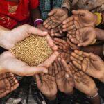 Obiettivo fame zero, l'UE annuncia 140 milioni per la ricerca sui sistemi alimentari sostenibili