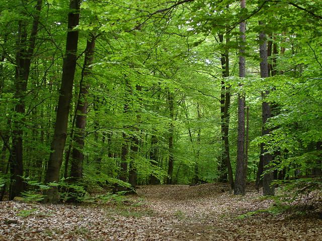 Nuova strategia ue per la gestione sostenibile delle for Pianta della foresta di pioppo