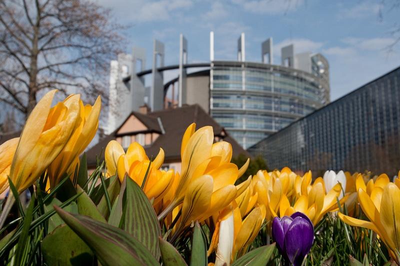 fiori strasburgo