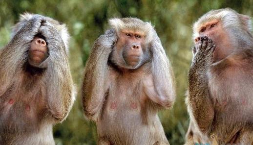 three-monkeys2