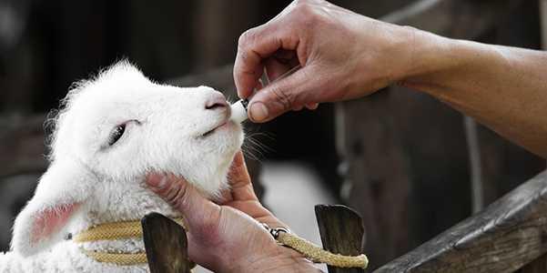 animali antibiotici