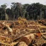 olio di palma, greenpeace, deforestazione Hsbc